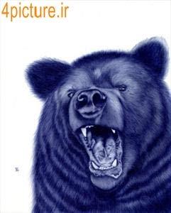 نقاشی خرس